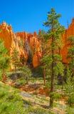 Bryce kanjonnationalpark Royaltyfria Bilder