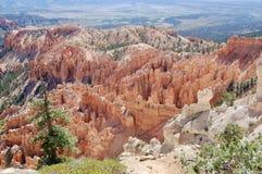 Bryce kanjonnationalpark utah royaltyfri bild