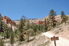 Bryce kanjonnationalpark utah fotografering för bildbyråer