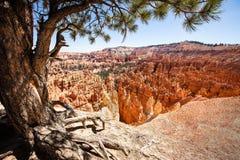 Bryce National Park Royalty-vrije Stock Afbeeldingen