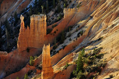 Bryce National Park Radiant Rocks & Hoodoos. Radiant morning sunlight sets the sculpted red rocks and hoodoos on fire with a glowing light Royalty Free Stock Image