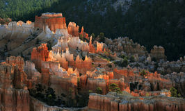 Bryce National Park Radiant Rocks & Hoodoos. Radiant morning sunlight sets the sculpted red rocks and hoodoos on fire with a glowing light Royalty Free Stock Photo