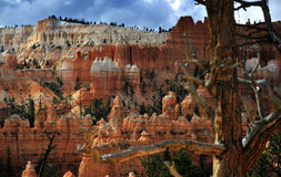 Bryce National Park Radiant Rocks & Hoodoos. Radiant sunlight sets the sculpted red rocks and hoodoos on fire with a glowing light Royalty Free Stock Photo