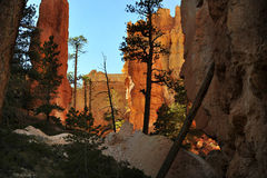 Bryce National Park Radiant Rocks & Hoodoos. Radiant sunlight sets the sculpted red rocks and hoodoos on fire with a glowing light Stock Image