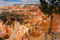 Bryce nationalpark royaltyfria foton