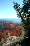 Bryce Overlook Tree. Bryce Canyon royalty free stock image