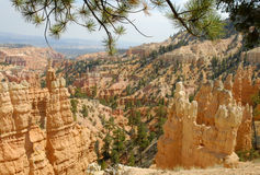 Bryce Pines. Pine branches over a landscape image of sandstone rock spires in Bryce Canyon National Park, Utah Stock Images