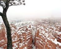 Bryce Schlucht im Winter Lizenzfreie Stockfotografie