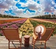 Bryczka hole w łące z kwiatami Zdjęcia Royalty Free