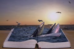 Bryde`s whales in the book. stock image
