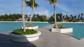 Brygga med palmtrees på förgrunden och bakgrunden Royaltyfria Bilder