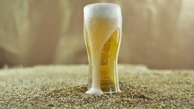 Bryggat ljust öl från ett privat hantverk som tillverkar bryggeriet, hälls in i ett exponeringsglas i ultrarapid på bakgrunden av lager videofilmer