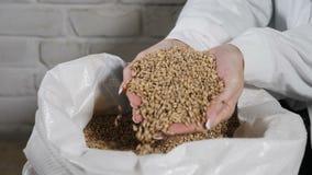 Bryggeribegrepp Närbild av hällande korn för bryggare till och med fingrar in i säcken på bryggerifabriken arkivfilmer
