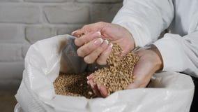 Bryggeribegrepp Närbild av hällande korn för bryggare till och med fingrar in i säcken på bryggerifabriken lager videofilmer
