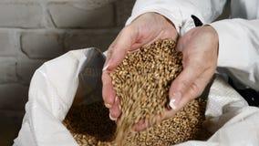 Bryggeribegrepp Närbild av hällande korn för bryggare till och med fingrar in i säcken på bryggerifabriken 4k lager videofilmer