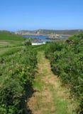 bryher cornwall scilly小径小岛英国 库存照片