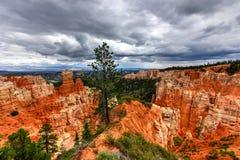 Bryka jaru park narodowy Zdjęcia Royalty Free