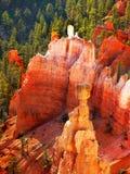 Bryka jaru park narodowy, Sceniczny przyciąganie, Utah, usa zdjęcia stock