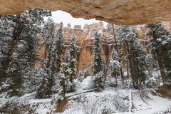 Bryka jaru parka narodowego Hoodoo zimy śniegu Lasowy widok zdjęcie stock