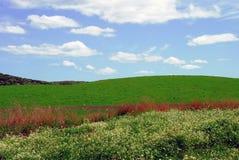 Brylant zieleni pole Obrazy Royalty Free