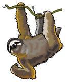 Sloth royaltyfri illustrationer