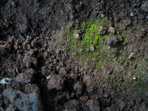 Bryophytes and soil Stock Images