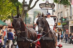 BRYSSEL BELGIEN - SEPTEMBER 06, 2014: Presentation av det Bosteels bryggeriet med hästvagnen royaltyfria foton