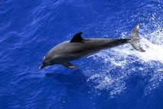 Bryta igenom delfin Arkivfoton
