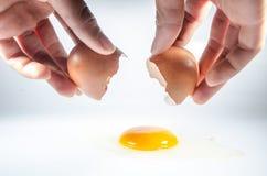 Bryter ägget Arkivbild