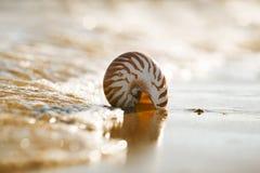Brytyjska lato plaża z łodzik denną skorupą Zdjęcie Royalty Free