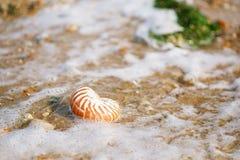 Brytyjska lato plaża z łodzik denną skorupą Obrazy Royalty Free
