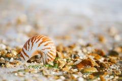 Brytyjska lato plaża z pompilius denną skorupą Zdjęcia Stock