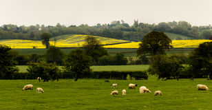 Brytyjska wieś Obraz Royalty Free