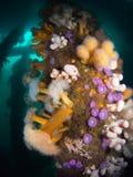 Brytyjski Denny życie - wyspa Coll Peir Zdjęcia Royalty Free