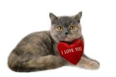 brytyjski kot Zdjęcia Royalty Free