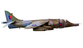brytyjski myśliwski błotniak odizolowywający dżetowy biel Fotografia Stock