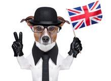 Brytyjski psa sztandar fotografia stock