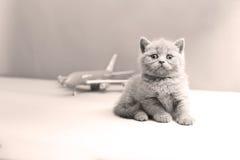 Brytyjski Shorthair dziecko i samolot Zdjęcie Stock