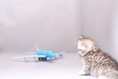 Brytyjski Shorthair dziecko patrzeje samolot Zdjęcie Stock