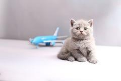 Brytyjski Shorthair dziecko patrzeje samolot Zdjęcia Stock