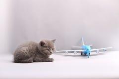 Brytyjski Shorthair dziecko patrzeje samolot Zdjęcie Royalty Free