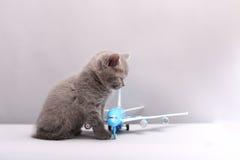 Brytyjski Shorthair dziecko patrzeje samolot Fotografia Royalty Free