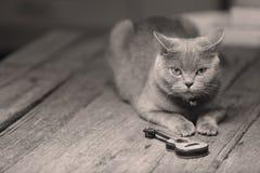 Brytyjski Shorthair kot i gitara Fotografia Stock
