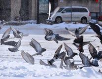 Bryzgać białego śnieg Zdjęcie Stock