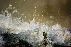 Bryzgać wodę fotografia stock