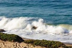 Bryzgający falę na backwash i piaskowatej plaży z iceplant, i, piasek zdjęcia stock