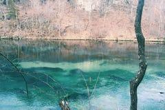 Brzęczeń brzęczeń tonka naturalne wiosny Zdjęcia Stock
