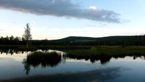 Brzask jesieni jezioro Lustrzany poziom wody w tajemniczym lesie, młody brzozy drzewo na wyspie w środku zdjęcie wideo