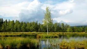 Brzask jesieni jezioro Lustrzany poziom wody w tajemniczym lesie, młody brzozy drzewo na wyspie w środku zbiory