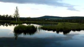 Brzask jesieni jezioro z małym kaczki lustra poziomem wody w tajemniczym lesie, młody drzewo na wyspie w środku zbiory wideo